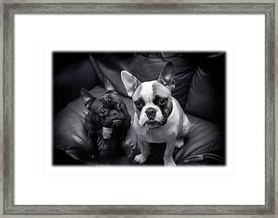 Bulldog Buddies Framed Print
