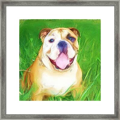 Bulldog Framed Print by Ritmo Boxer Designs