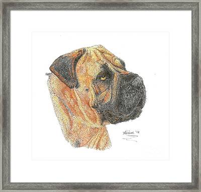 Bullmastiff Framed Print by Bill Hubbard