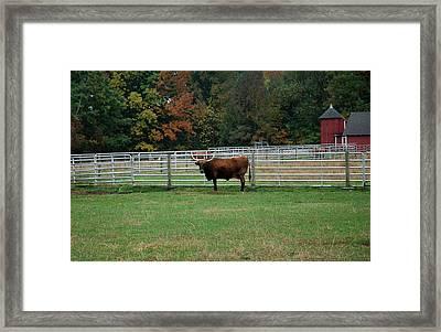 Bully Bull Framed Print by LeeAnn McLaneGoetz McLaneGoetzStudioLLCcom