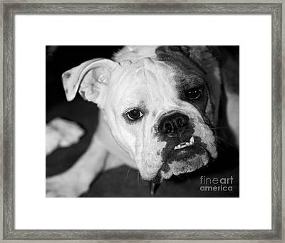 Bully Framed Print by Leslie Leda