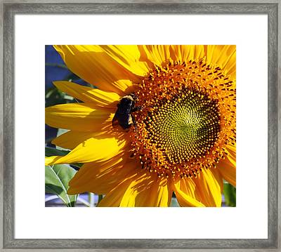 Framed Print featuring the photograph Bumble Bee And Sunshine by Lynnette Johns