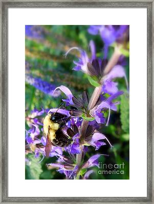 Bumble Bee On Flower Framed Print by Renee Trenholm