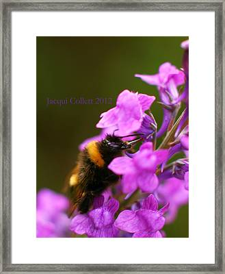 Bumble Framed Print by Jacqui Collett