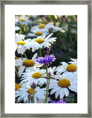 Bumble On A Button Framed Print