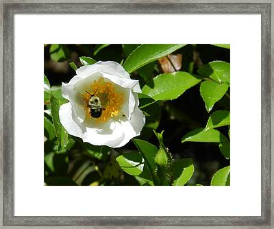 Bumblebee Framed Print by Don L Williams
