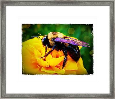 Bumblebee With Bokeh Framed Print by Judi Bagwell