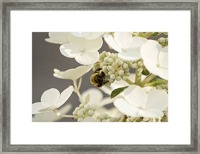 Bunblebee Hiding Framed Print by Michel DesRoches