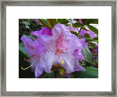 Bunch Framed Print by Lexis Cook