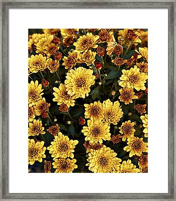 Bunch Of Flowers Framed Print by Malania Hammer