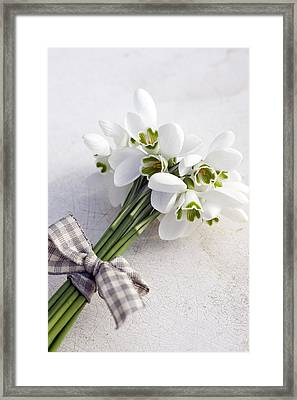 Bunch Of Snowdrops (galanthus Nivalis) With Purple Ribbon Framed Print