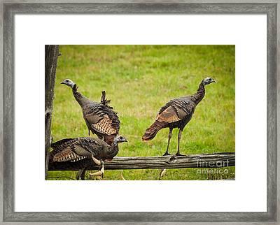 Bunch Of Turkeys Framed Print by Cheryl Baxter