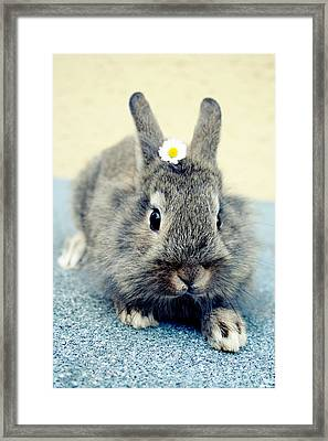 Bunny Framed Print by Falko Follert