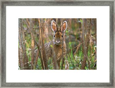 Framed Print featuring the photograph Bunny by Josef Pittner