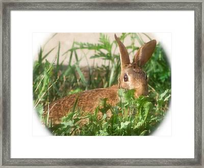 Bunny Playing Hide And Seek Framed Print by Maureen  McDonald