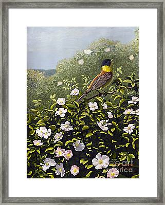 Bunting And Wild Roses Framed Print