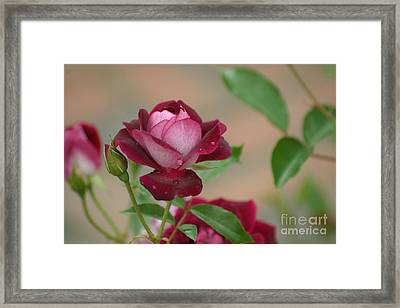 Framed Print featuring the photograph Burgundy Iceberg by Living Color Photography Lorraine Lynch