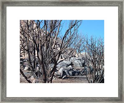Burned Forest 4 Framed Print