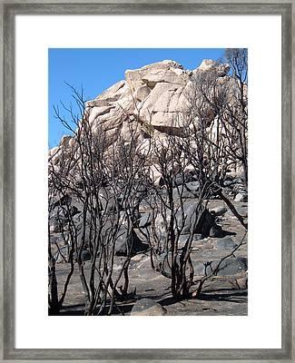 Burned Forest 5 Framed Print