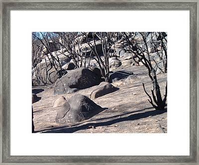 Burned Forest 7 Framed Print