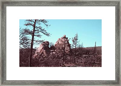 Burned Forest Framed Print by Naxart Studio