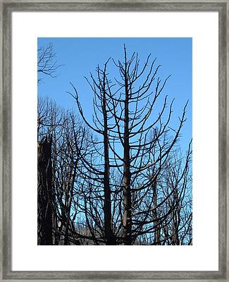 Burned Trees 2 Framed Print by Naxart Studio