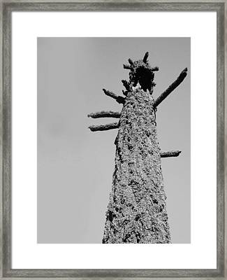 Burned Trees 4 Framed Print by Naxart Studio