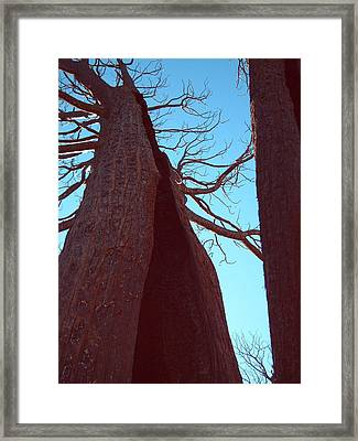 Burned Trees 6 Framed Print by Naxart Studio