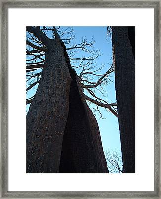 Burned Trees 7 Framed Print by Naxart Studio