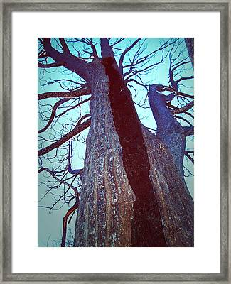 Burned Trees 8 Framed Print by Naxart Studio