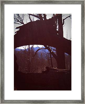 Burned Trees 9 Framed Print by Naxart Studio