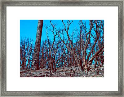 Burned Trees And The Sky Framed Print by Naxart Studio