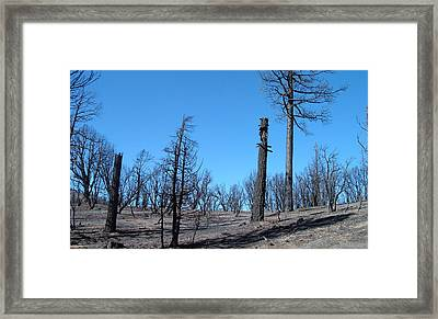 Burned Trees In California Framed Print by Naxart Studio