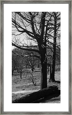 Burned Trees Framed Print by Naxart Studio