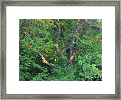 Framed Print featuring the photograph Burnt Daylight by Mark Robbins