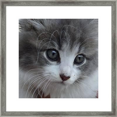Burr Baby Framed Print