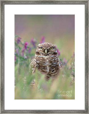 Burrowing Owl Framed Print by Doug Herr