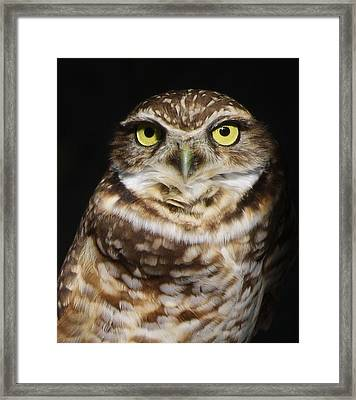 Burrowing Owl Framed Print by Paulette Thomas