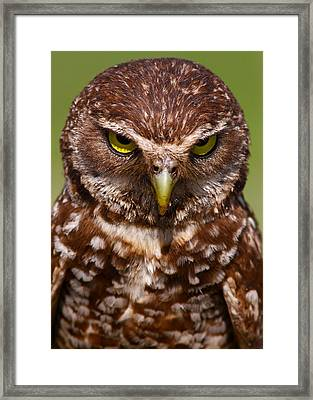 Burrowing Owl Framed Print by Scotthelfrichphotography.com