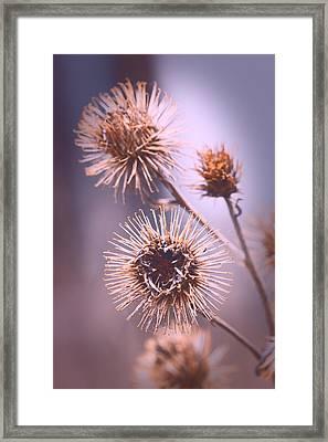 Burrs Framed Print