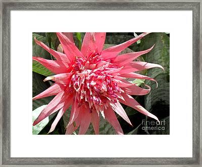 Framed Print featuring the photograph Burst Of Pink by Beth Saffer