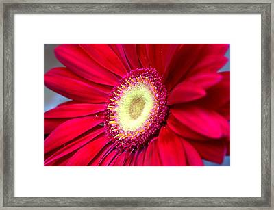 Burst Of Red Framed Print