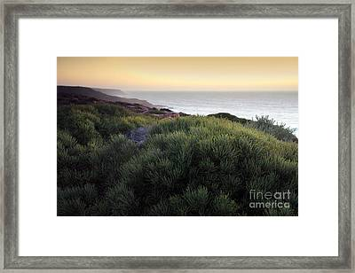 Bush At Twilight Framed Print by Roberto Bettacchi