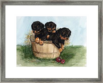 Framed Print featuring the painting Bushel Of Rotty Pups  by Nancy Patterson