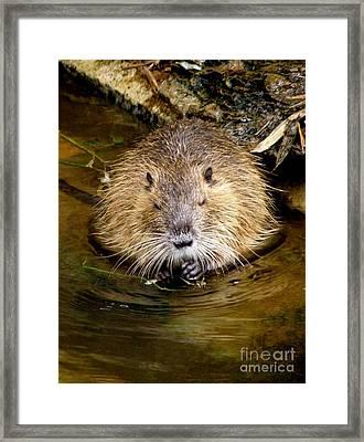 Busy As A Beaver Framed Print by Lainie Wrightson