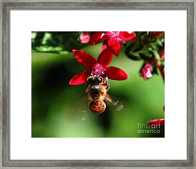 Busy As A Bee Framed Print