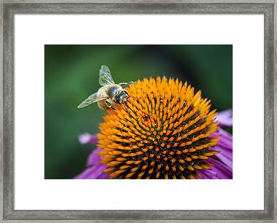 Busy Bee Framed Print by Jen Morrison