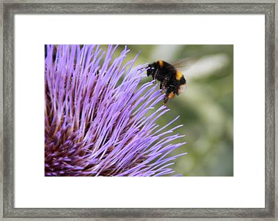 Busy Bee Framed Print by Karen Grist