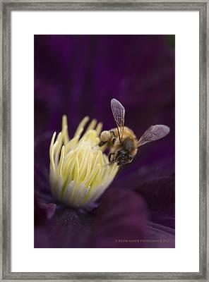 Busy Bee Framed Print by Kelvin Andow