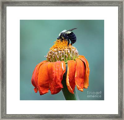 Busy Bee Framed Print by Marilyn West